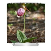 Pink Ladys Slipper Shower Curtain