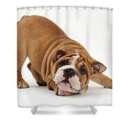 Playful Bulldog Pup Shower Curtain