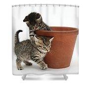 Playful Kittens Shower Curtain