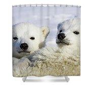 Polar Bear Ursus Maritimus Three Shower Curtain
