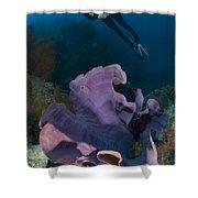 Purple Elephant Ear Sponge With Diver Shower Curtain