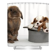 Rabbit And Spaniel Pups Shower Curtain