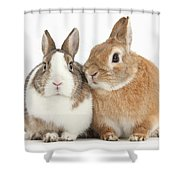 Rabbits Shower Curtain