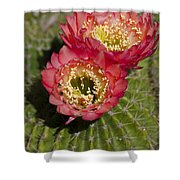 Red Cactus Flowers Shower Curtain