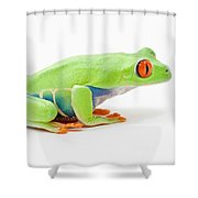Red-eyed Tree Frog Agalychnis Shower Curtain