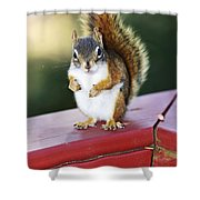 Red Squirrel On Railing Shower Curtain