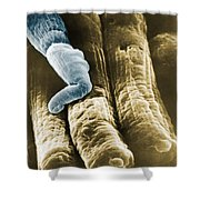 Rods And Cones Shower Curtain by Omikron