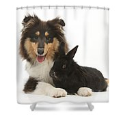 Rough Collie With Black Rabbit Shower Curtain