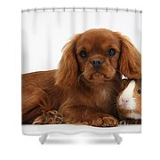 Ruby Cavalier King Charles Spaniel Pup Shower Curtain