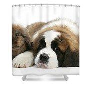 Saint Bernard Puppy With Rabbit Shower Curtain