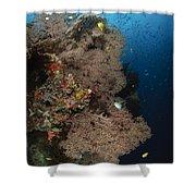 Sea Fans, Fiji Shower Curtain