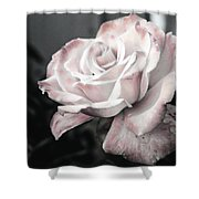 Secret Garden Rose Shower Curtain
