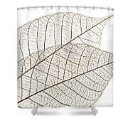 Skeleton Leaves Shower Curtain by Elena Elisseeva