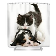 Sleeping Puppy Shower Curtain