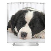 Sleepy Puppy Shower Curtain