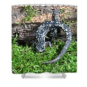 Slimy Salamander Shower Curtain
