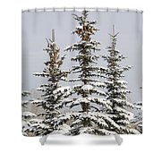 Snow Covered Evergreen Trees Calgary Shower Curtain