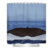 Sperm Whale Tail New Zealand Shower Curtain