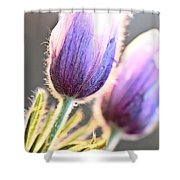 Spring Time Crocus Flower Shower Curtain