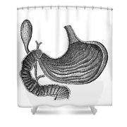 Stomach And Bile Duct Shower Curtain