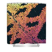 Sunset Moth Urania Ripheus Shower Curtain