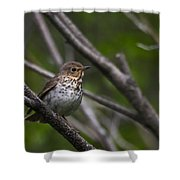 Swainsons Thrush Shower Curtain