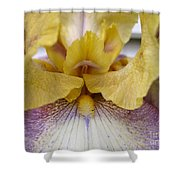 Tall Bearded Iris Named Butterfingers Shower Curtain