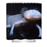 Texas Blind Salamander Eurycea Rathbuni Shower Curtain