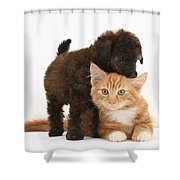 Toy Poodle Puppy With Kitten Shower Curtain