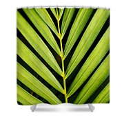 Tropical Palm Frond Shower Curtain