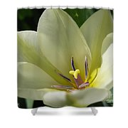 Tulip Named Perles De Printemp Shower Curtain