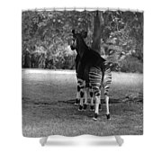 Two Stripes In Black And White Shower Curtain