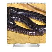 West African Caecilian Shower Curtain