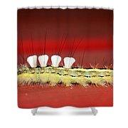 White Tussock Caterpillar Shower Curtain