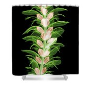 X-ray Of An Acanthus Flower Shower Curtain