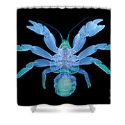 X-ray Of Coconut Crab Shower Curtain