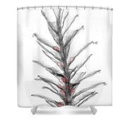 X-ray Of Pinecone With Seeds Shower Curtain