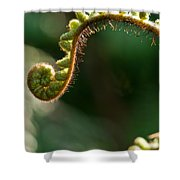 Young Fern In The Morning Sun Shower Curtain