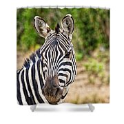 Zebras In The Masai Mara Shower Curtain