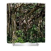 20120915-dsc09877 Shower Curtain