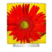 2024a1-001 Shower Curtain