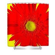 2024a2-003 Shower Curtain