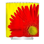 2024a2-006 Shower Curtain