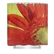 2026a5-003c Shower Curtain