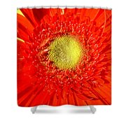 2026a5-009 Shower Curtain