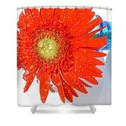 2042a-002 Shower Curtain