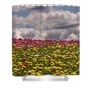 Flower Fields Shower Curtain