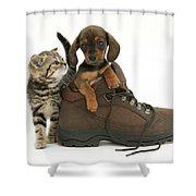 Kitten And Puppy Shower Curtain by Jane Burton