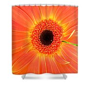 2157-001 Shower Curtain