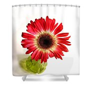 2193c1pn Shower Curtain